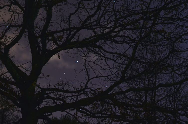 Nightphotography Treesandstars Treescollection Trees And Sky Autumn🍁🍁🍁 Nikon D5100  50mm Bretagne My Love Nightlights FreeSpirit ✌ Wildlovers