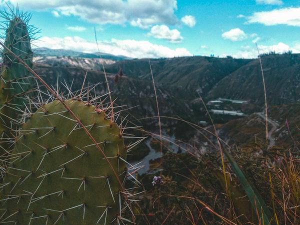 Cactus andino Cactus Nature Nature Photography Landscape Desenfoque PrimerPlano Cotopaxi Ecuador Ecuador Dayoff Capturedonp9 HuaweiP9 Huaweiphotography Movilgrafias Mobilephotography Mobilographer Smartgraphers Brz