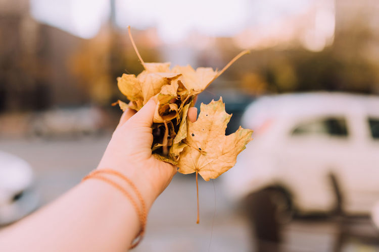 Leaves Adult Adults Only Autumn Autumn Leaves Clasp Close-up Clutch Copyspace Day Fall Focus On Foreground Halloween Hold Holding Horizontal Human Body Part Human Hand Nature One Person One Woman Only Only Women Outdoors People Throw