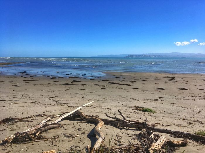 WAIMARAMA BEACH Driftwood Blue Sky Background Sea Beach Water Horizon Over Water Nature Beauty In Nature Scenics Sand Sky