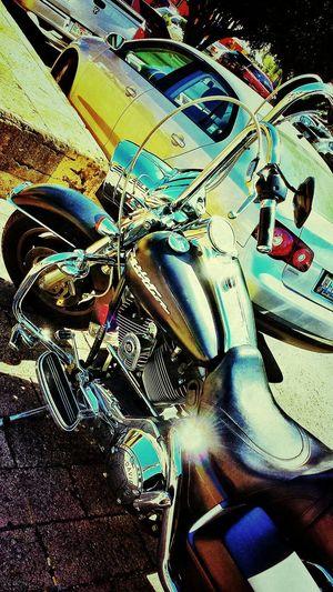 Harley at the