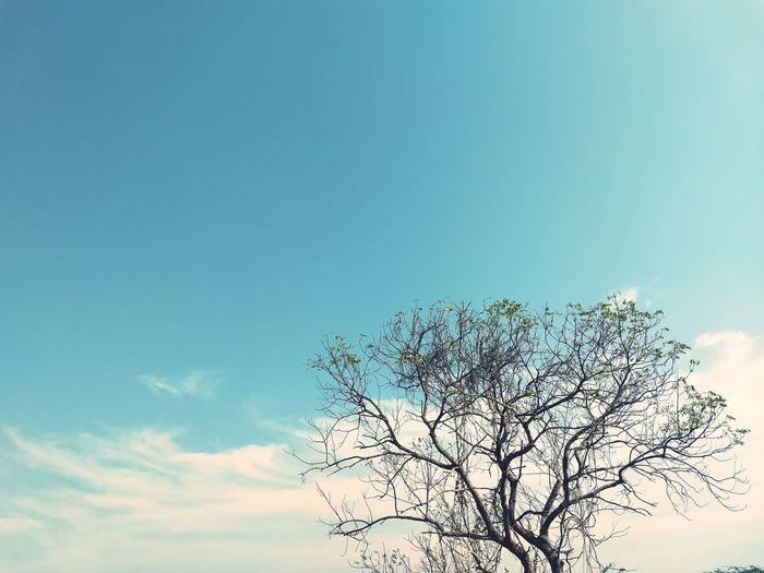 Trees Greenery