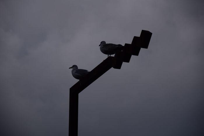 Sea gull on sign post. Sea Gulls Seaside Nature Wildlife Birds Sky Silhouette