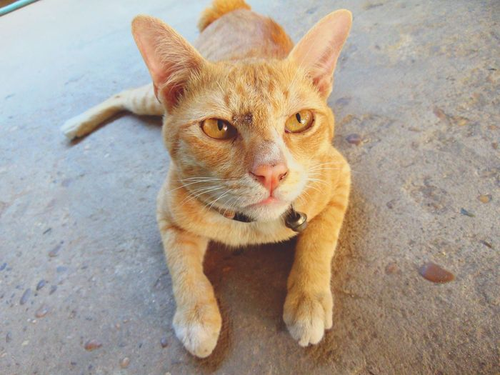 Portrait of ginger cat sitting outdoors