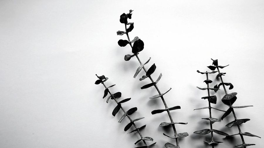 decorative plants Pure Pure Nature Beauty In Nature Interior Still Life Photography Simplicity Silhouette Filigran Flowers Filigran Leaves Monochrome Natural Structures Blackandwhite Pattern Atmospheric Mood Still Life Close-up Backgrounds Pattern, Texture, Shape And Form Botanical Structures In Nature Structures Shadowplay Simplicity White Background Branches Leaves🌿 EyeEm Best Shots EyeEm Nature Lover EyeEm Masterclass EyeEm Best Shots - Black + White