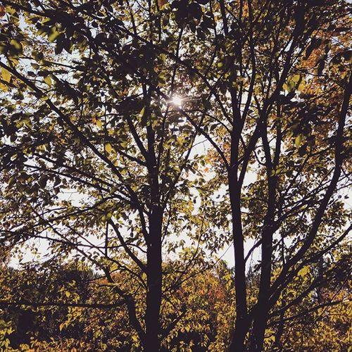 🌿 🍁 🍂 . . Autumn Autun Fallcolors Fall Yellowleaves Leaves Leavesfalling Trees Naturelovers NaturalBeauty Sunlight Sunshine Walk Park Lightandshadow Komorebi November Italia Liveloveitaly Landscape Instanature Foto_naturel
