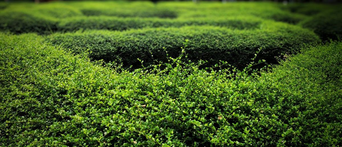 Mazes of Green