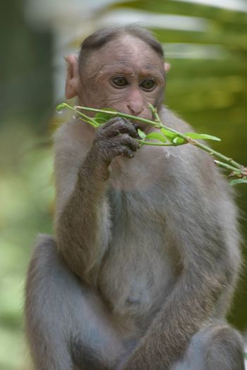 Close-up of monkey looking away while holding plant