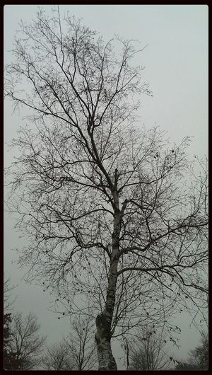 Trees Snowing Snow Wintertime a grey day in upstate bankrupt New York :)
