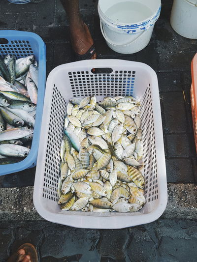 Young Food Colour Of Life Fish Market Street Photography Street From My Point Of View Travel Photography Showcase August Film Travelling Tropical Things The Magic Mission Hanging Out Exploring Food Food Photography Enjoying Life މާލެ