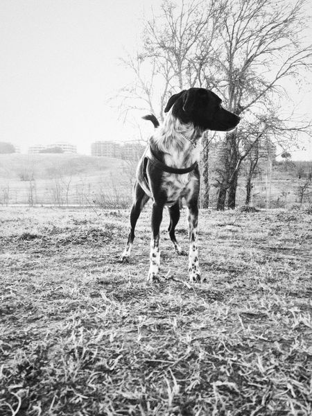 Posing #2 Animal Themes Bare Tree Day Dog Domestic Animals Field IPhoneography Mammal Mobilephotography Nature No People One Animal Outdoors Pets Sky Tree VSCO Vscocam