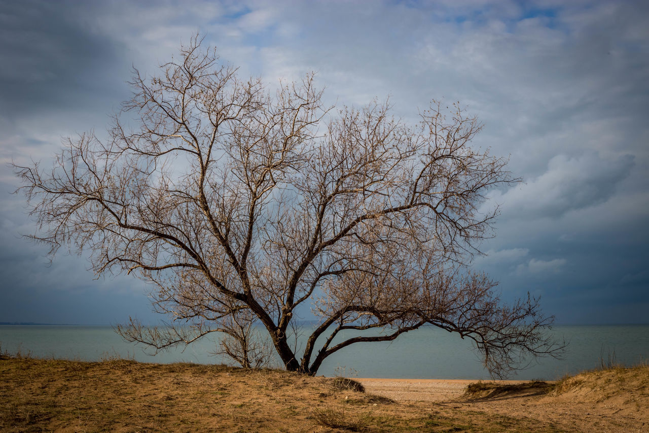 bare tree, sky, landscape, tree, nature, tranquility, lone, beauty in nature, tranquil scene, outdoors, day, horizon over land, branch, scenics, no people