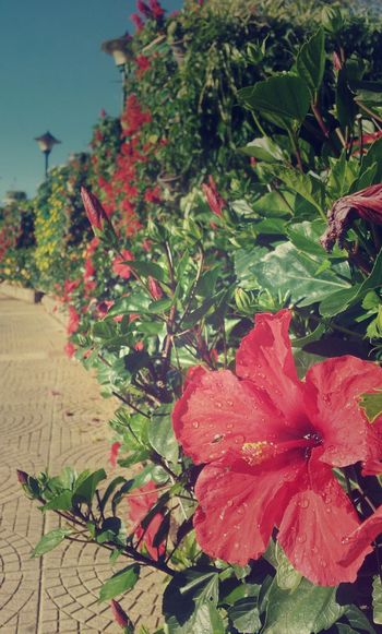Flowers Mobile Phone Camera