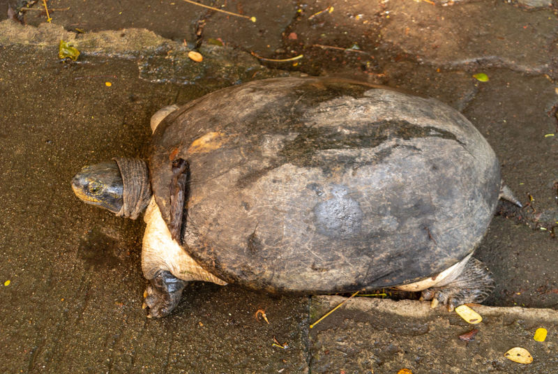 Bangkok Zoo Animal Close-up Coconut Day Directly Above Dusit Emotion Full Length High Angle View Land Nature No People Outdoors Single Object Solid Turtle Water Widelife Wood - Material