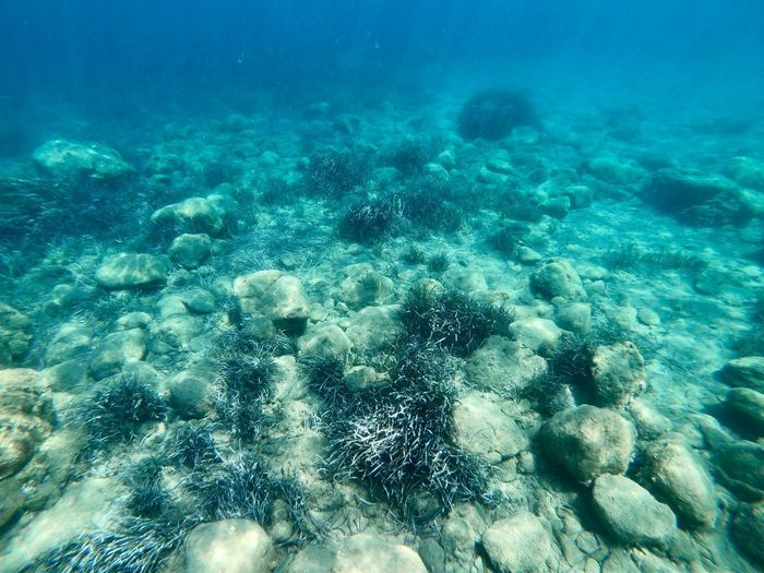 Underwater Sea UnderSea Water Nature Sea Life Coral Ocean Floor Outdoors Marine Turquoise Colored Day Reef Beauty In Nature Invertebrate No People Blue