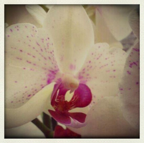 Flowers Nature Orchids Petals