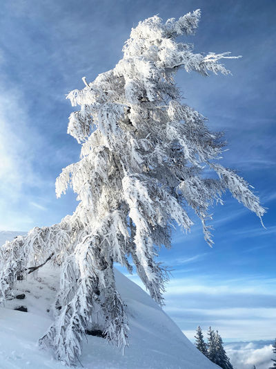 Frozen tree against sky during winter
