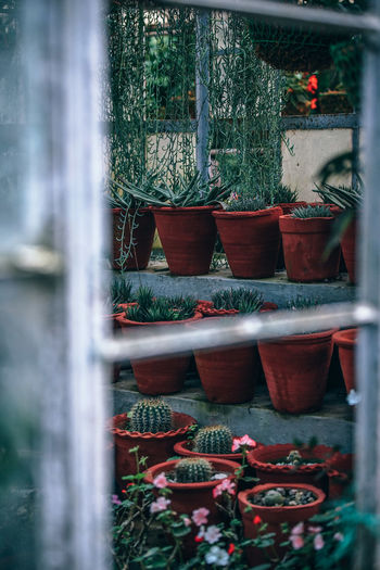 Potted Plants In Greenhouse Seen Through Window