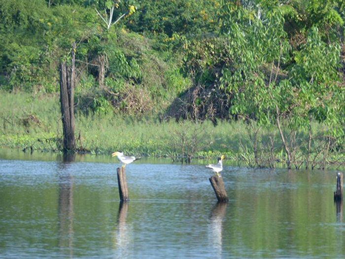Itacoatiara Amazing Amazonas