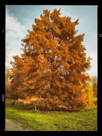 Autumn Herbst Herbstfarben Herbststimmung Park See Lietzensee Charlottenburg  Tree Plant Autumn Transfer Print Nature Orange Color Beauty In Nature Day Scenics - Nature Tranquility Growth No People Sky Tranquil Scene Outdoors Grass