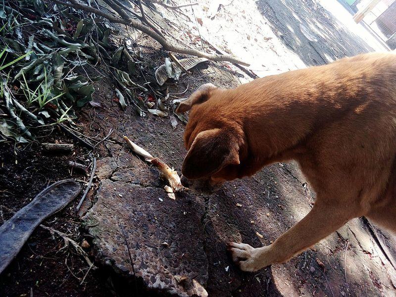 Dog❤ !!!♥♥ Dog Dog Dog !!!!😉😉