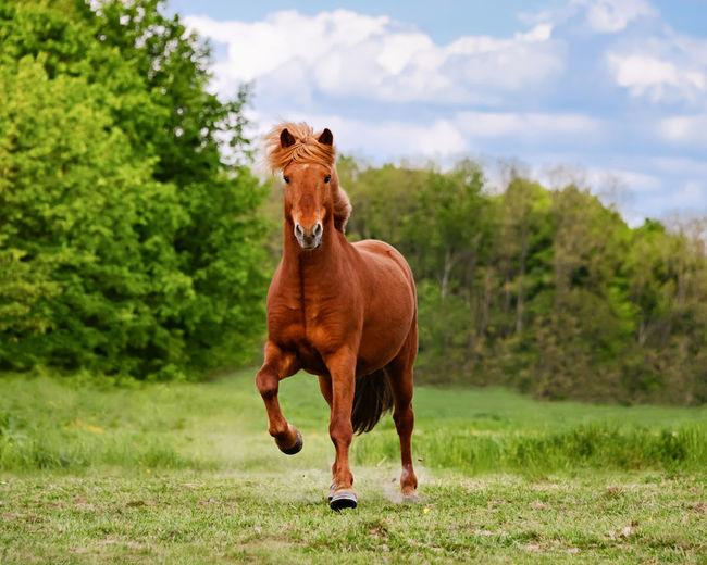 Horse running on grassy field against trees