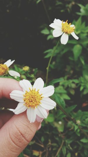 Nature Flowers Refreshing Enjoying Life