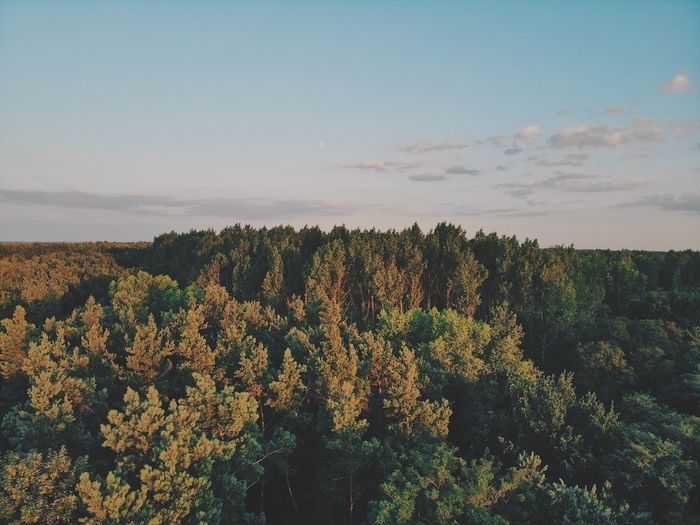 Tree Sky Plant Beauty In Nature Growth Tranquility Scenics - Nature Tranquil Scene No People Nature Tree Cloud - Sky Land Landscape Non-urban Scene Outdoors Day