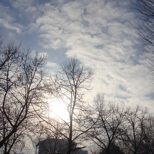 Il sole? 21of365 2013 Aphotoaday January sun sky clouds nuvole cielo mysky mycity igerstorino igerspiemonte trees tree alberi theskyiseverywhere