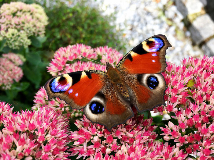 Close-up of butterfly on flowers