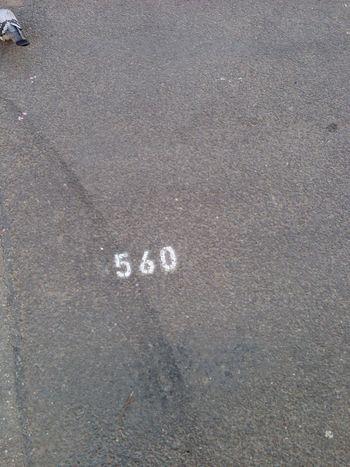 Street Floor Number Pigeon Goudron