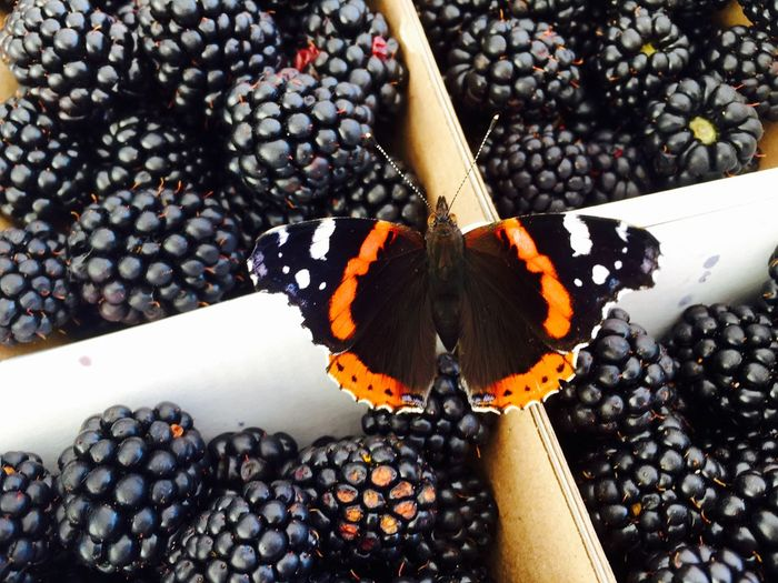 High angle view of butterfly on blackberries box