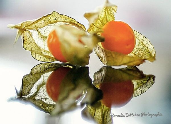 Vegetable Healthy Eating Food Freshness Food And Drink No People Close-up Nature Day Picofday Pic Früchtchen Physalia Physalis Physalis Fruit Fotooftheday Nature Beauty In Nature Picture Photography Photooftheday Indoors  Indoors  Picoftheday
