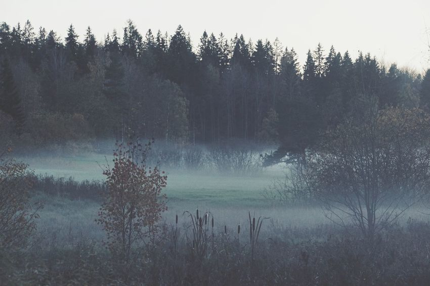 Niklas Storm Okt 2018 Autumn Autumn Collection Fall Tree Forest Fog Sky Countryside Tranquil Scene Foggy Weather Idyllic Weather Condition Bare Tree Mist Calm Non-urban Scene Tranquility Scenics