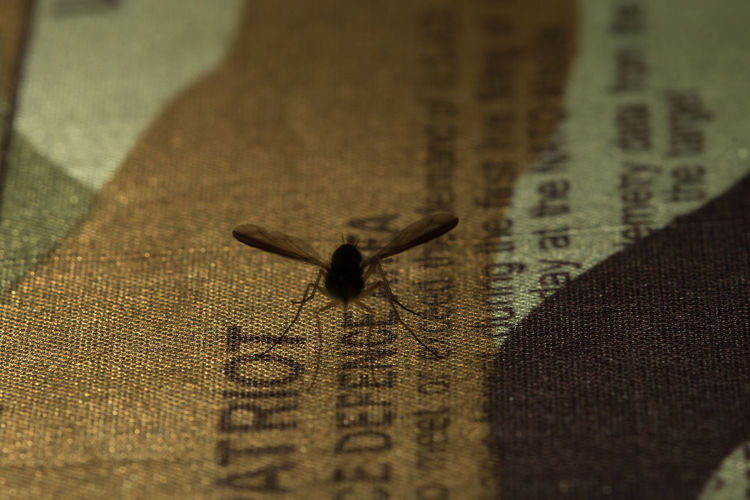 Close-up of insect on paper