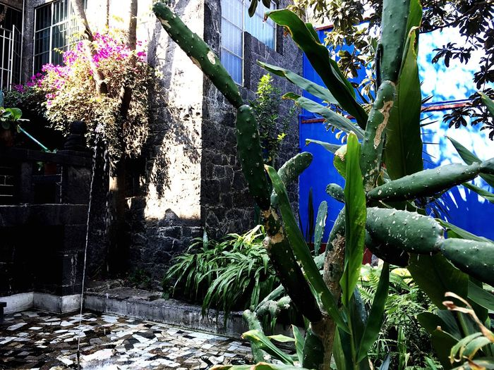 Flower Growth Nature Plant Purple Beauty In Nature No People Fragility Built Structure Sunlight Freshness Outdoors Day Tree Frida Kahlo Museum Architecture Vine