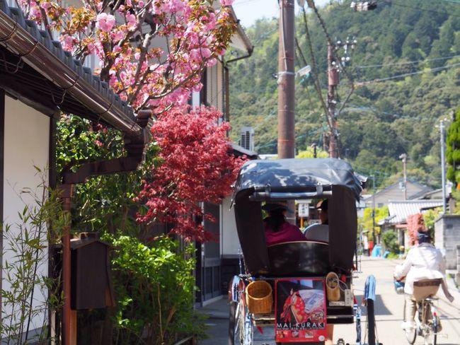 Kyoto Japan Arashiyama Sagano Cherry Blossom Sakura Flower Mountain Jinrikisha Spring Olympus PEN-F 京都 日本 嵐山 嵯峨野 桜 八重桜 人力車 春