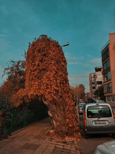 Street amidst trees against sky in city