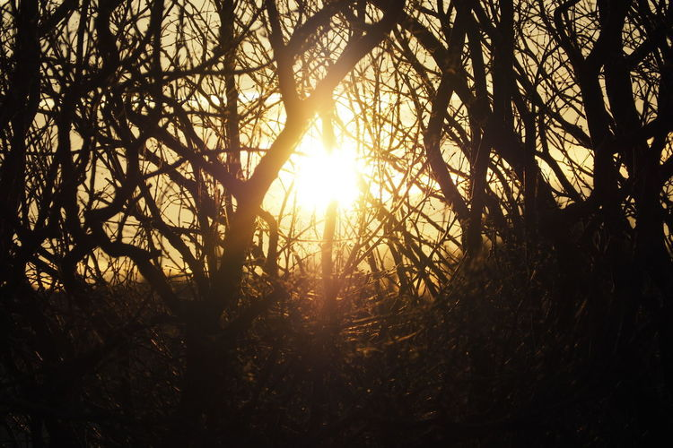 Tree Tree Area Sunset Dawn Forest Branch Sunlight Silhouette Tree Trunk Sun Streaming Outline Rays Calm