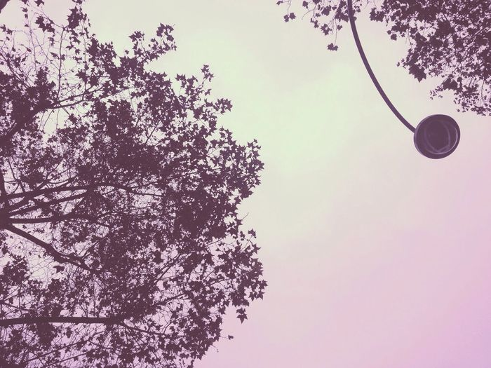 Sky Paris Pink Tree Autumn Leaves🌿 Lamp Post