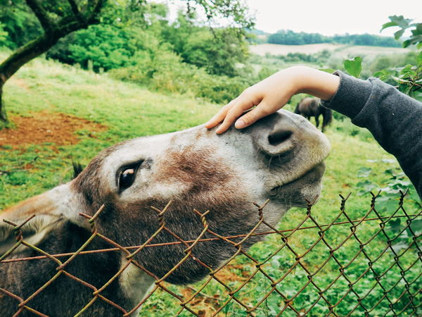 Donkey Donkeylove Stroking Petting Petting Animals Animal Animals Animals In The Wild Animal Photography Petting Horses EyeEm Best Shots Eye4photography  In Touch With Nature Harmony With Nature Hands At Work Hands In Frame