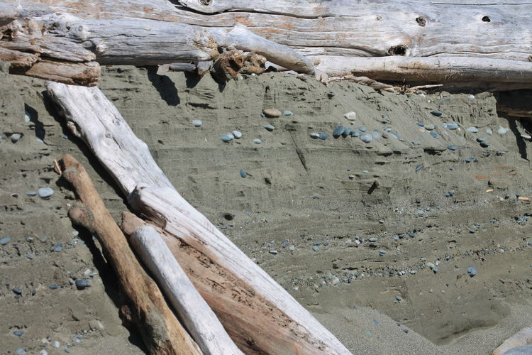 Creek Black Sands Driftwood Beach Erosion Lostshoe Outdoors Sand Cliff Sloppy Nature