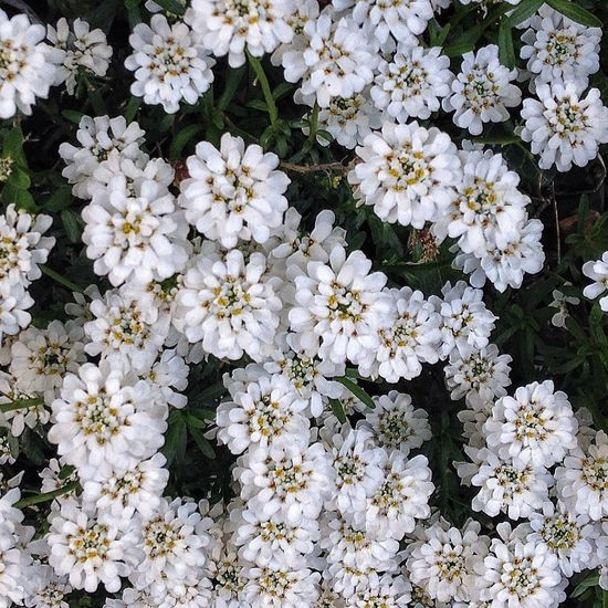 Nature's Beautiful Patterns. Nature White Flowers Pattern Texture Textures And Surfaces Organic Bio Garden