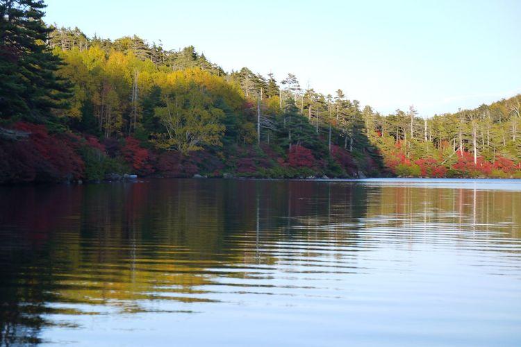 Fall Beauty Water Reflections Coloredleaves EyeEm Nature Lover EyeEm Best Shots - Landscape Yellow Leaves Shirakoma Pond Eyevision Nagano, Japan ひたすら続く白駒池😅🍂🍁☺️いつもありがとうございます🙏😊