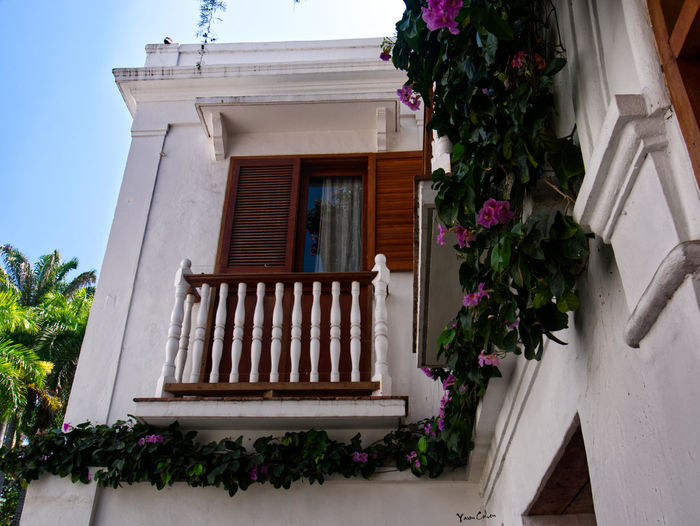 Low angle view of potted plants on balcony of building