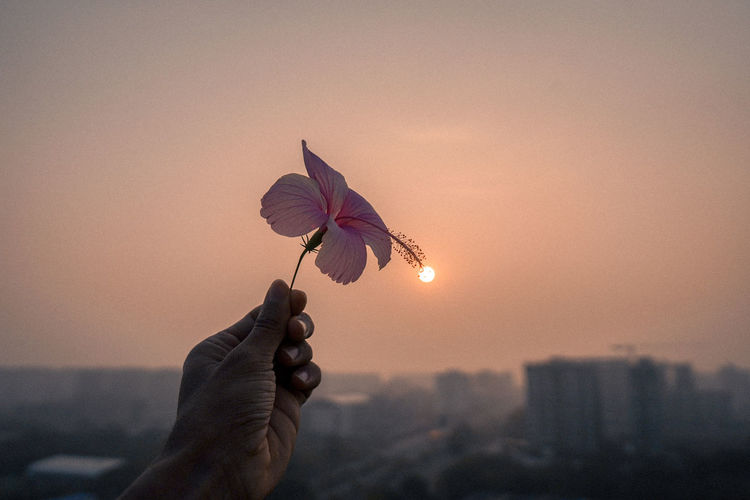 Close-up of hand holding flower against sky during sunset