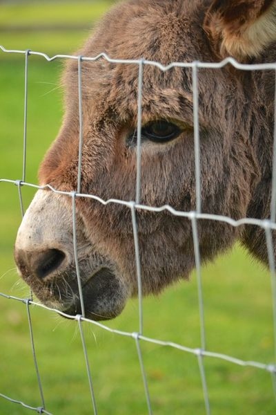 Donkey On The Farm EyeEm Nature Lover