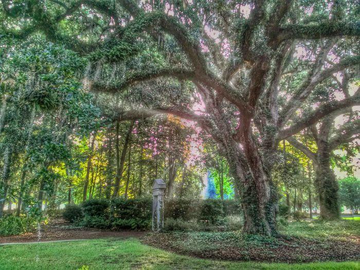 Sun blast! Tree TreePorn Nature Landscape
