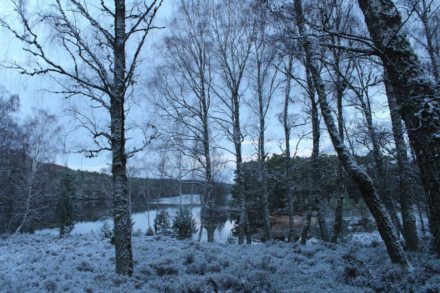 Frost Frozen Loch An Eilein Shades Of Winter Bare Tree Beauty In Nature Branch Cold Temperature Day Forest Landscape Nature No People Outdoors Scenics Sky Snow Snow Scene  Tranquil Scene Tranquility Tree Water Winter