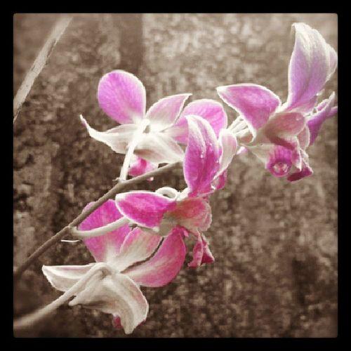 Mama's Orchid Mistymorning Xperiashot HappyTuesdayMorning